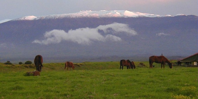 Horses grazing in a lush field with a snow-capped mountain in the background.